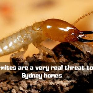 Termite inspection Sydney