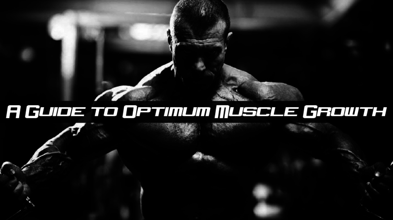 A Guide to Optimum Muscle Growth