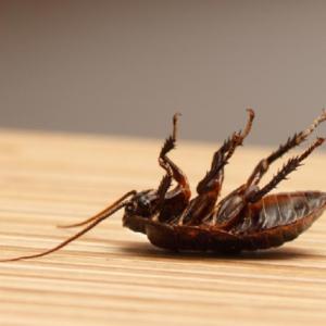 pest inspections brisbane